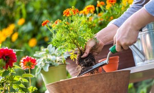 8 Fun and Therapeutic Activities for Arthritis Sufferers