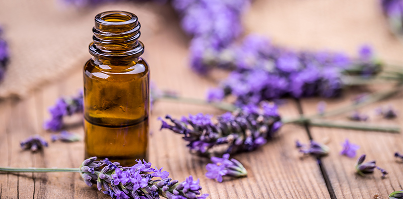 Lavender surrounding a bottle of essential oils